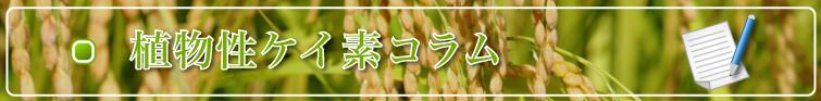 植物性ケイ素コラム